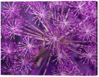 Obraz na Płótnie Angelica archangelica - fiolet