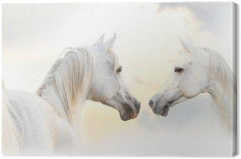 Obraz na Płótnie Arabian biały koń