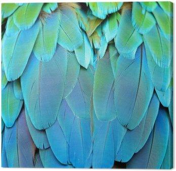 Obraz na Płótnie Arlekin pióra ara
