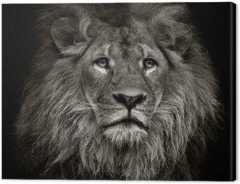Obraz na Płótnie Arogancki lew