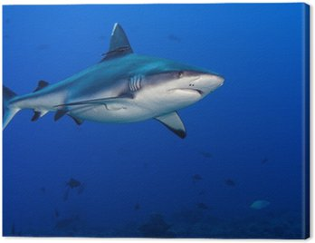 Obraz na Płótnie Atak rekina pod wodą