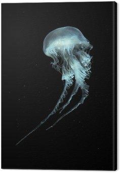 Atlantic Sea Nettle Jellyfish