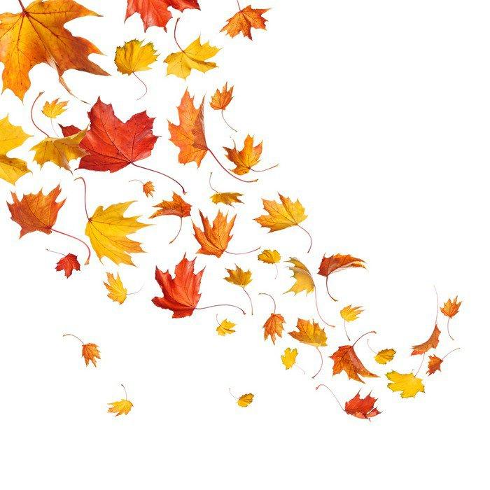 Obraz na Płótnie Autumn Leaves Falling - Pory roku