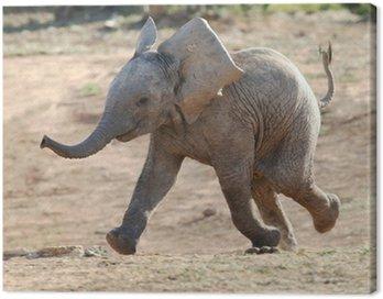 Obraz na Płótnie Baby Elephant Running