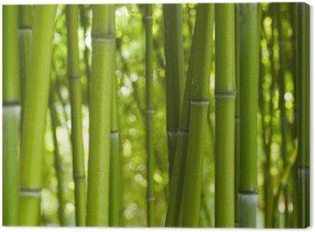 Obraz na Płótnie Bambus bambus 06