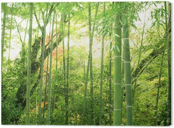 Obraz na Płótnie Bambus lesie