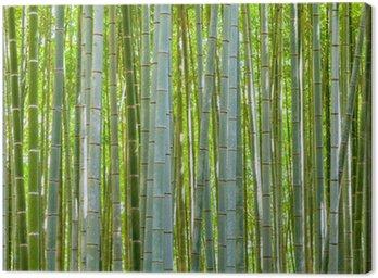 Obraz na Płótnie Bambus tła z natury na dzień