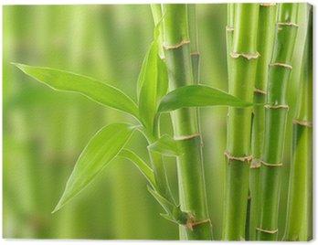 Obraz na Płótnie Bambus