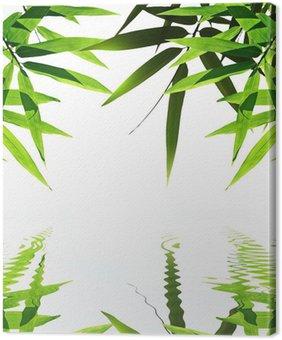 Obraz na Płótnie Bambusa z odbicia w wodzie, zen atmosferze.