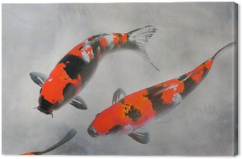 Obraz na Płótnie Bawełniane koi ryb ilustracji akwarela