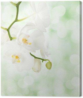 Obraz na Płótnie Biała orchidea na nieostre światło zielone tło.