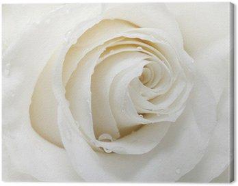 Obraz na Płótnie Biała róża