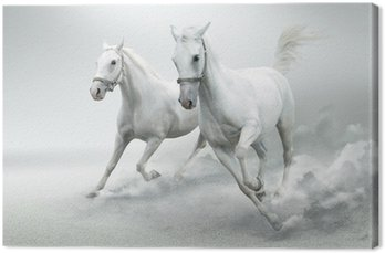 Obraz na Płótnie Białe konie