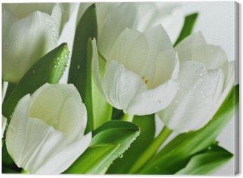 Obraz na Płótnie Białe tulipany