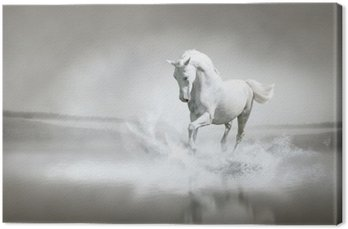 Obraz na Płótnie Biały koń biegnie przez wody