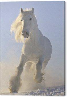 Obraz na Płótnie Biały koń galop bieg w zimie
