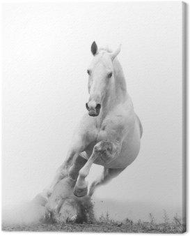 Obraz na Płótnie Biały koń