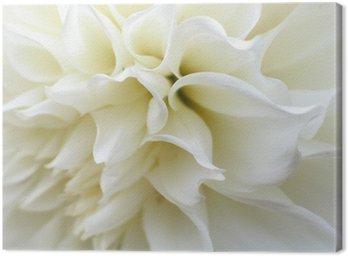 Obraz na Płótnie Biały kwiat