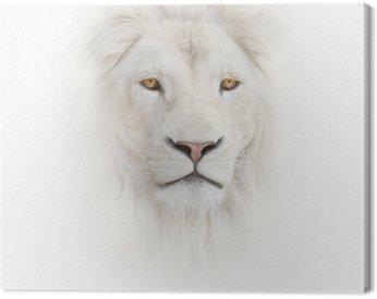 Obraz na Płótnie Biały lew na białym tle