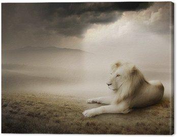 Obraz na Płótnie Biały lew na zachodzie słońca