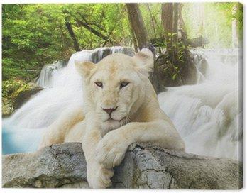 Obraz na Płótnie Biały lew