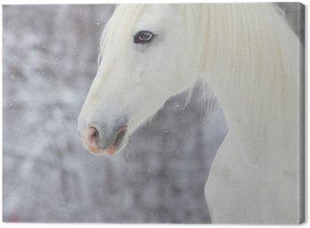 Obraz na Płótnie Biały piękny koń