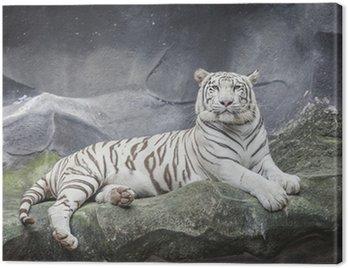 Biały tygrys na skale