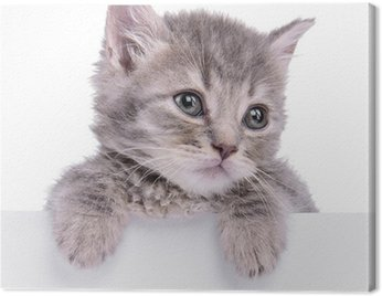 Obraz na Płótnie Billboard kociak trzyma