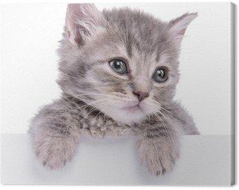 Billboard kociak trzyma