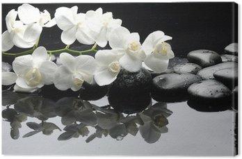 Obraz na Płótnie Bliska Biała orchidea z kropli wody z kamienia