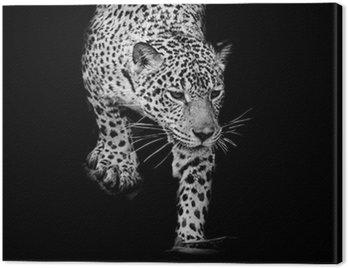 Obraz na Płótnie Bliska, czarno-biały Jaguar Portret