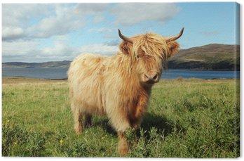 Obraz na Płótnie Bliska Scottish Highland krowy w polu