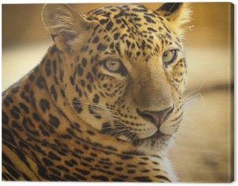 Obraz na Płótnie Bliska twarz jaguar zwierząt