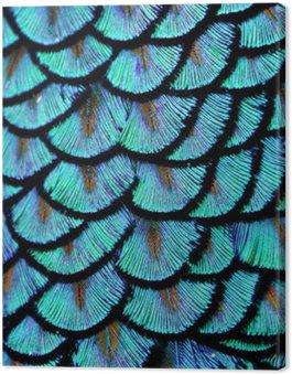 Obraz na Płótnie Blue feathers