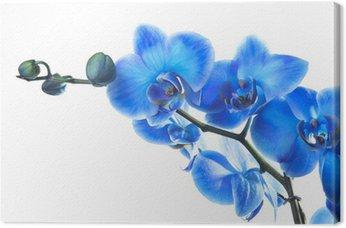 Obraz na Płótnie Blue Orchid