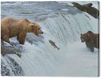 Obraz na Płótnie Brązowy niedźwiedź grizzly łososia w rzece polowania, Alaska, Katmai