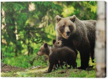 Obraz na Płótnie Brązowy niedźwiedź w lesie rodzina