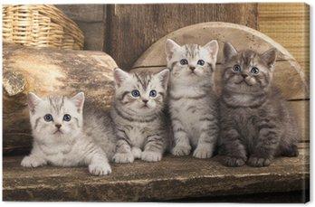 Obraz na Płótnie British kitten na tle retro