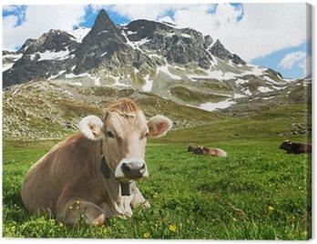 Obraz na Płótnie Brown krowa na zielonych pastwiskach trawa