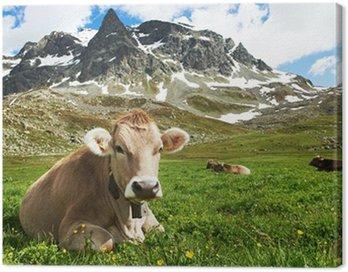 Brown krowa na zielonych pastwiskach trawa