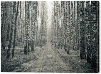 Obraz na Płótnie Brzozowy las w czerni i bieli