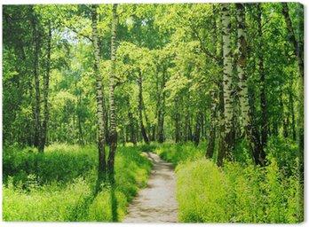 Obraz na Płótnie Brzozowy las w słoneczny dzień. Zielony las w lecie