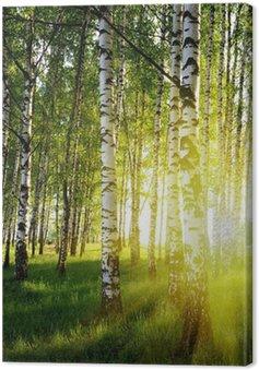 Obraz na Płótnie Brzozy w lesie latem
