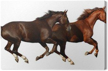 Obraz na Płótnie Budenny konie galop - samodzielnie na białym tle