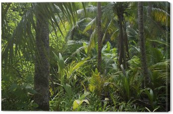 Obraz na Płótnie Bujnej dżungli tropikalnej tropikalnych tła