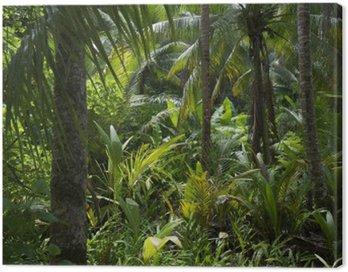 Bujnej dżungli tropikalnej tropikalnych tła