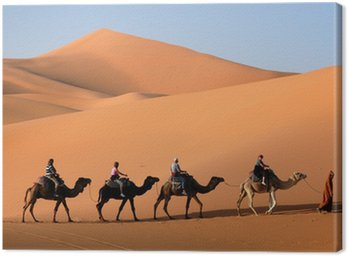 Camel karawana idzie na wydmy na Saharze