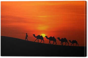 Camel Sillhouette karawana z zachodem słońca