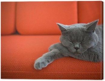 Obraz na Płótnie Cat relaks na kanapie.