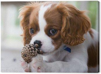 Obraz na Płótnie Cavalier King Charles Spaniel puppy